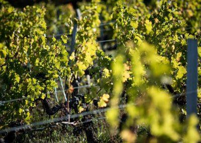 vignes-cotes-de-bourg